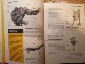 Anatomie im Muskel-Guide