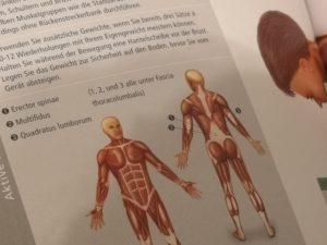 Anleitung, Variationen, Aktive Muskeln